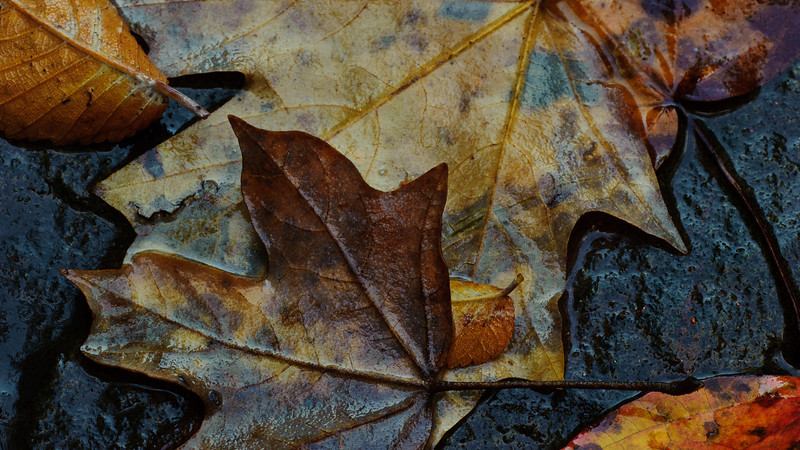 autumn, saturated with rain