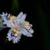 april morning in bloom