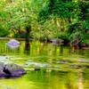morning magic at Turkey Creek Nature Preserve