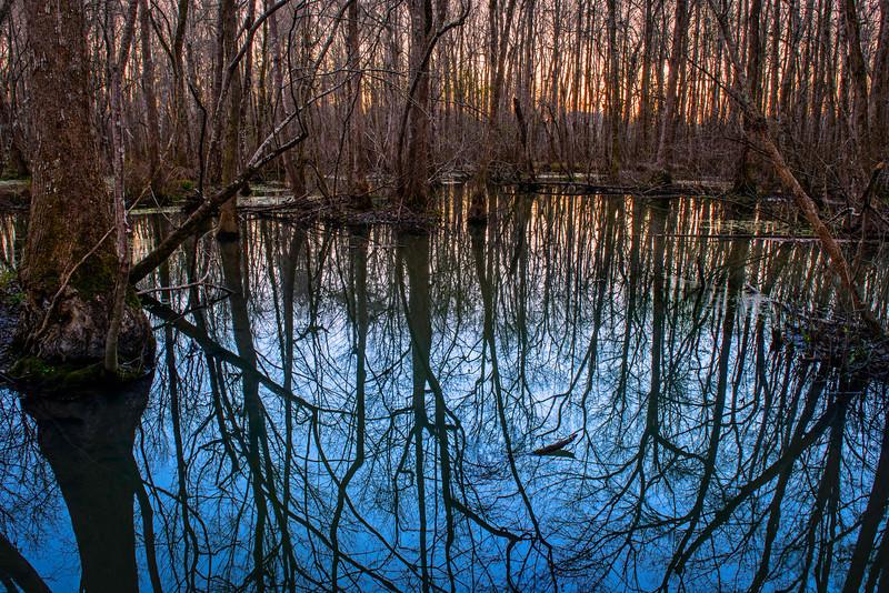 sunset through the trees at Ebenezer Swamp
