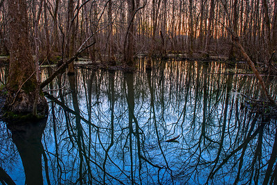 sunset through the trees at Ebenezer Swamp