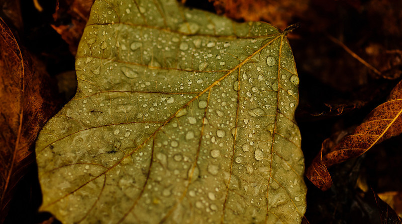 rainy day leaf