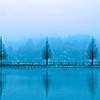 trees through the winter fog at Star Lake