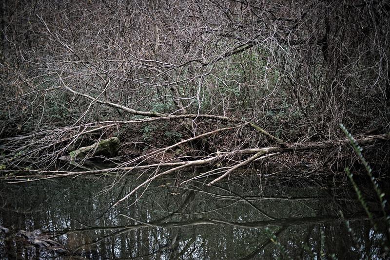 walker bait