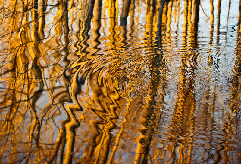 swamp ripples radiating