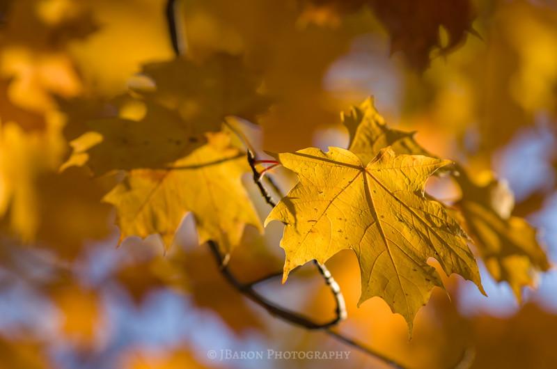 Yellow Leaf Foliage