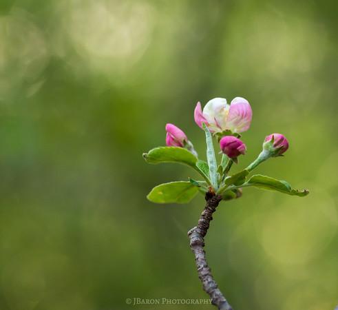 Springtime at Beechwood Farms 9916