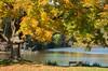 Fall at Marshall Lake