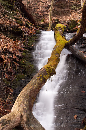 Fallen Tree and Waterfall