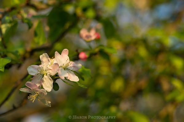 Spring Blooms at North Park 7611