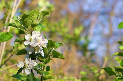 Blooms at Beechwood Farms