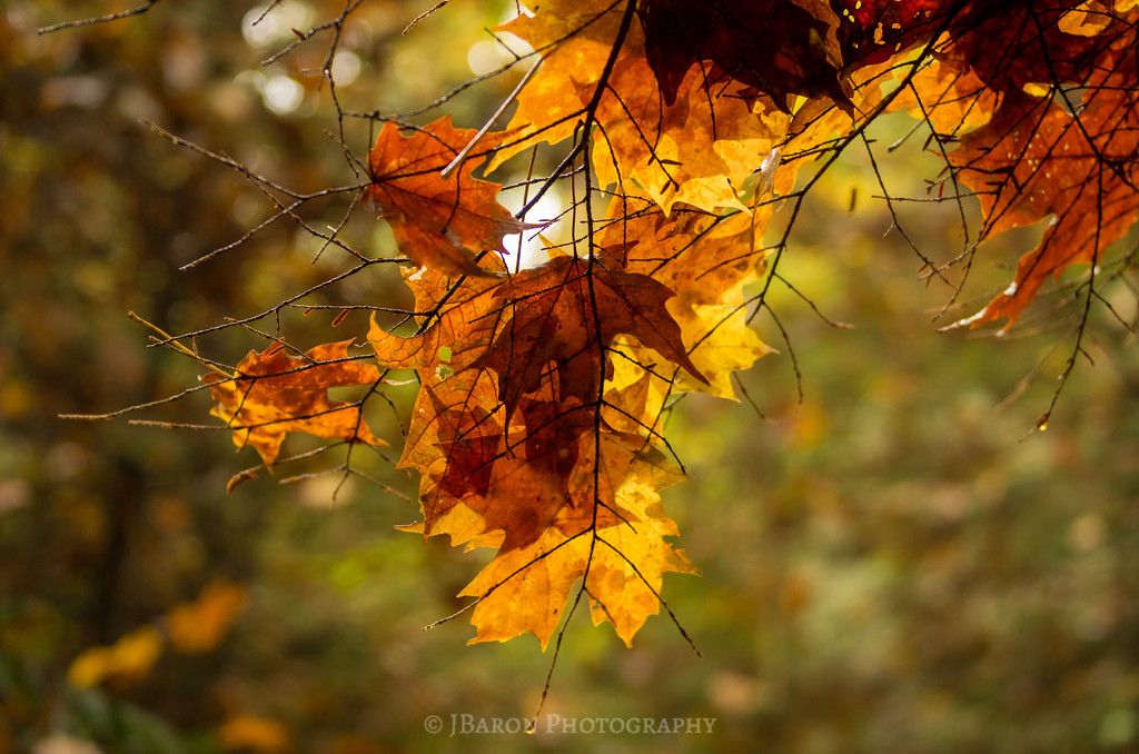 Layers of Leaves