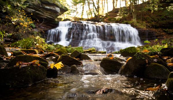Yellow Leaf at Springfield Falls