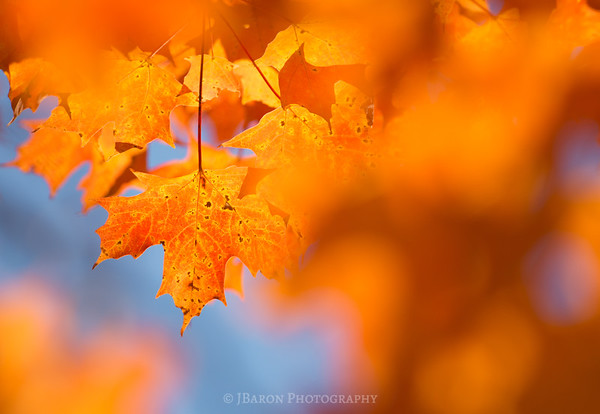 Glowing Orange Foliage