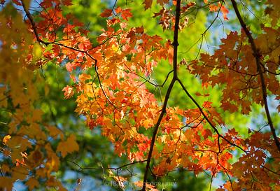 Fall Foliage Spotlight