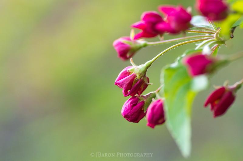 Springtime Bloom at Beechwood Farms 9924