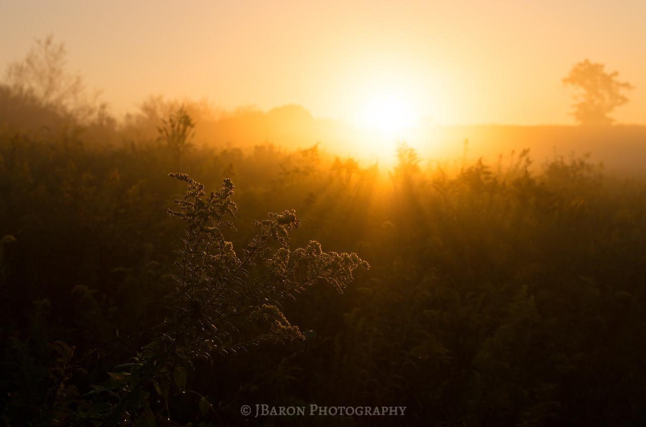 Sunrise over a Field of Goldenrod 9967
