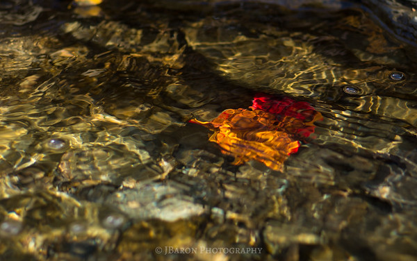 Autumn Leaf Under Water