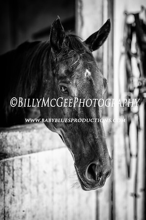 Fair Hill Stables - 02 Aug 2015