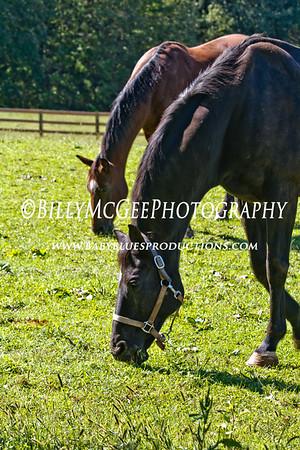 Horses - 18 Sep 2011