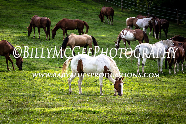 Horses in the Field - 27 Jul 2014