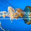 Baltimore National Aquarium - 28 Jan 2017