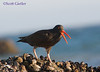 oystercatcher, big rock, malibu