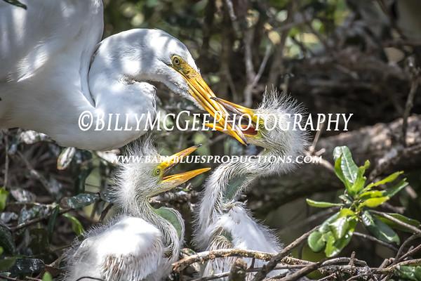 St. Augustine Alligator Park - 21 May 2015