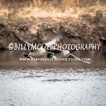 Middle Creek WMA - 25 Feb 2017