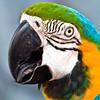 Bird-Beek - IMG-7795
