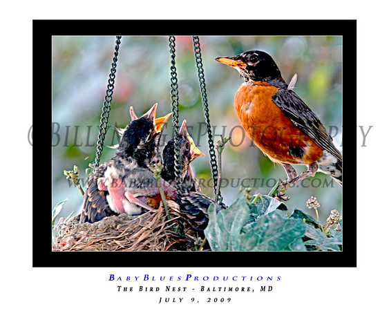 The Nest 07
