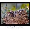 The Nest 05