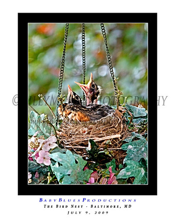 The Nest 12