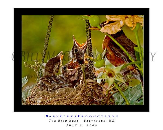 The Nest 02
