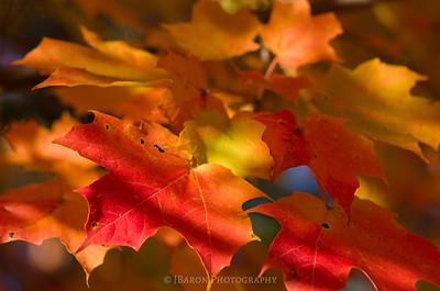 Fall Foliage and Shadows