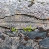 Historic rock wall - The magic of the Isle of Skye, Scotland
