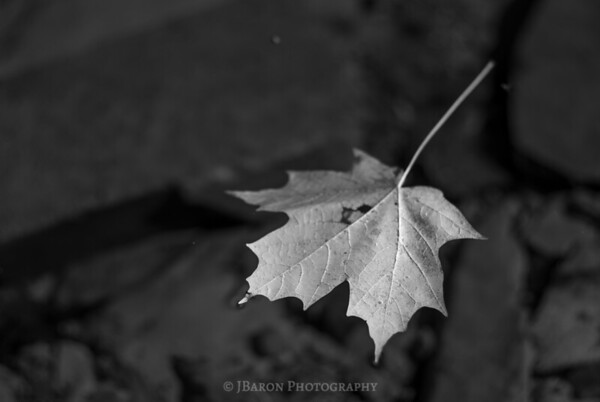A Floating Leaf
