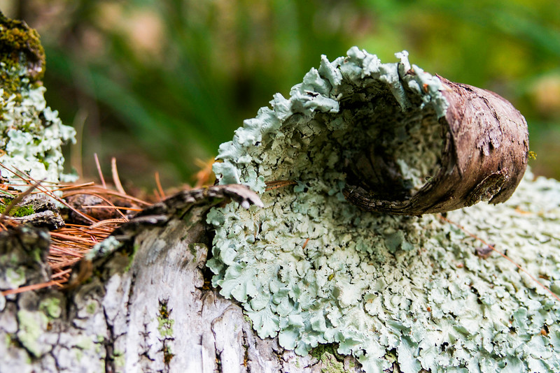 Curling Birch Bark with Moss