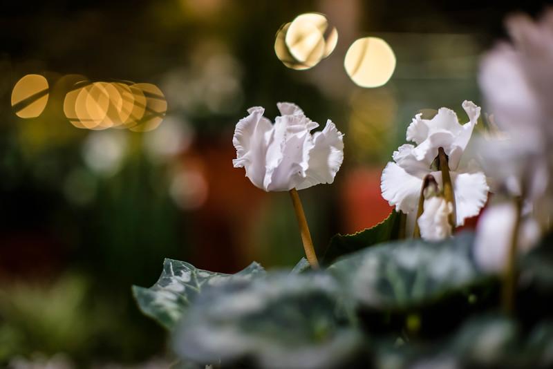Nursery flower