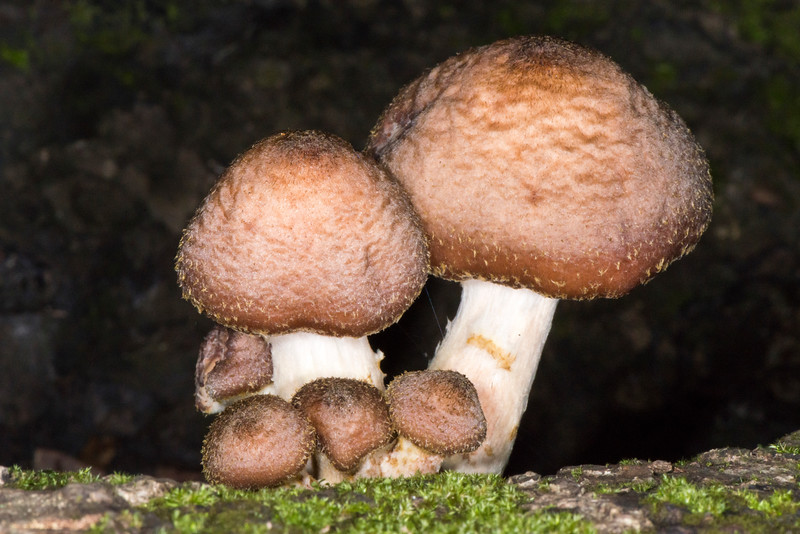 Unknown Mushrooms