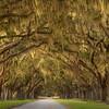 Avenue of the Oaks