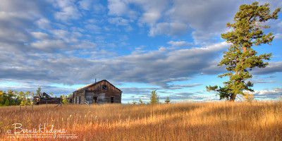 Old homestead  A124433