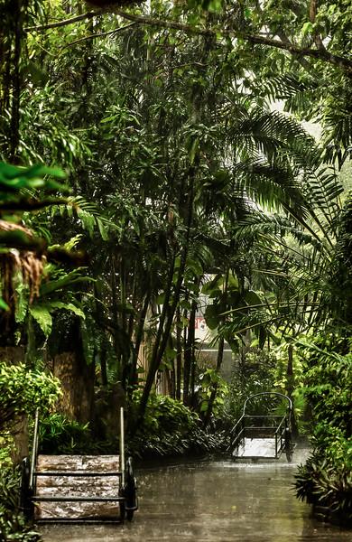Rain in Phuket Zoo