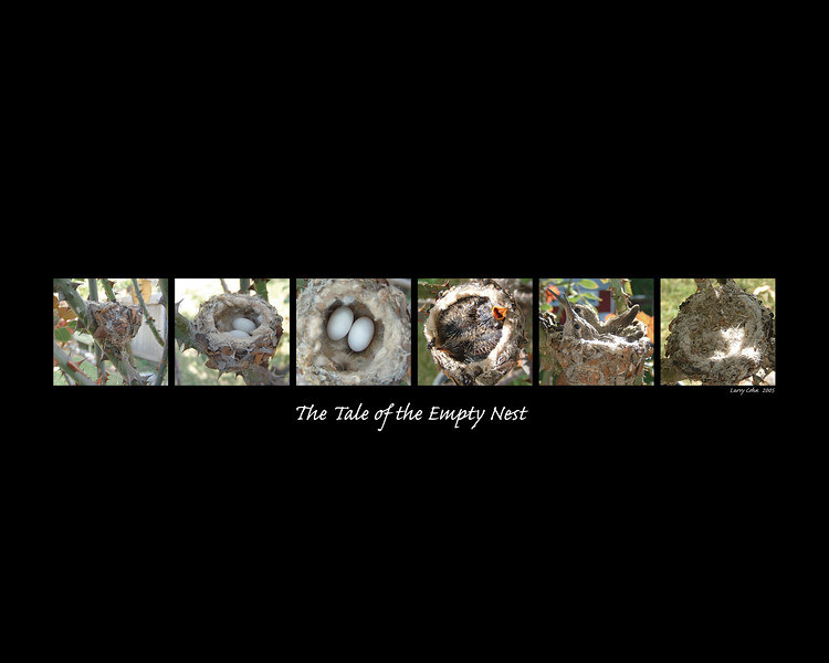 """The Tale of the Empty Nest™<br /> 16"""" * 20"""" <br /> Series of photos of the development from birth to leaving home of this Humming Bird family in a rose bush."""