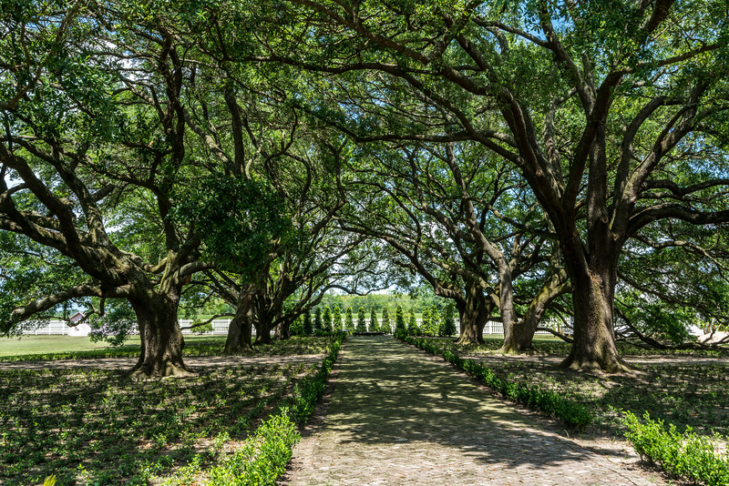 Main Path leading to the Whitney Plantation