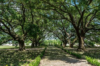 Main Path leading to the Whitney Plantation