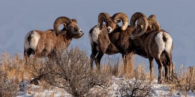 Kamloops Rams