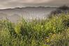 temescal canyon, pacific palisades
