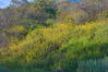 temescal canyon, malibu