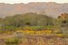 before sunrise, joshua tree state park